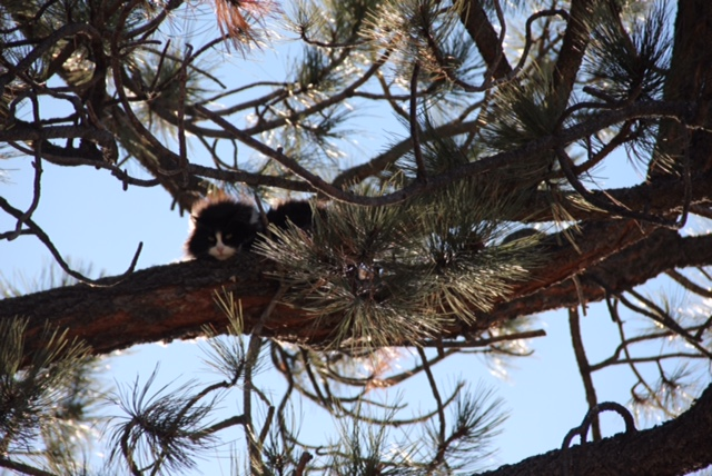 Hermosa enjoying her up high tree perch