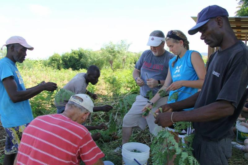 Partners of the Moringa Project Harvest Leaves