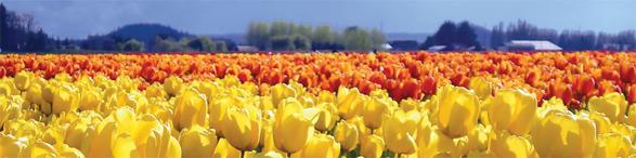 Tulip Time Cruises