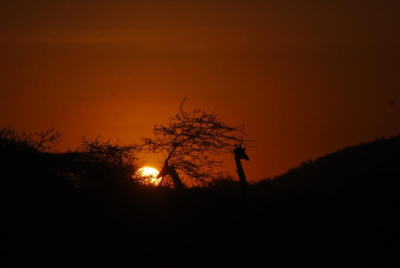 twiga sunset