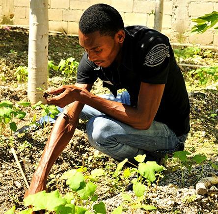 Planting in Haiti