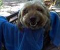SoHo Dog