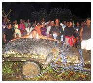 TR crocodile