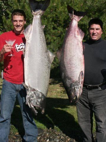 King salmon