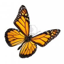 Monarch White