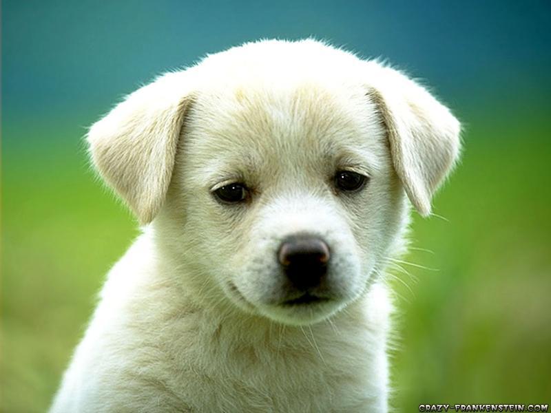 Dog August PT