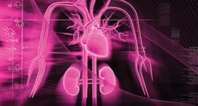 Kidney Heart