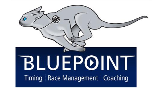 bluepoint cat