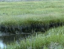 Old Creek Marsh