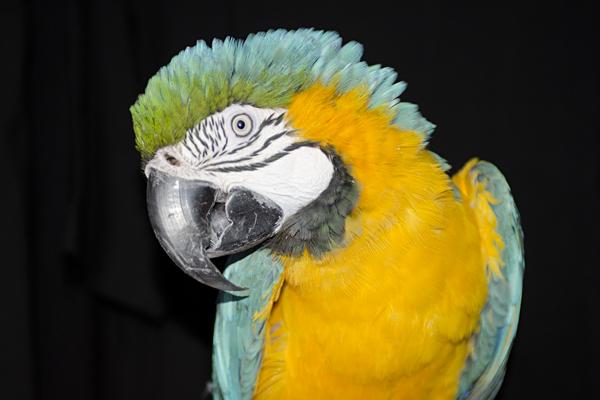 Cecil Portrait