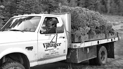 Rob w xmas trees in truck bw
