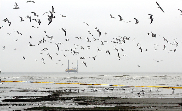 Gulf Oil Spill - birds & rig