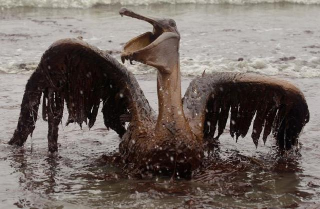Bird Oily