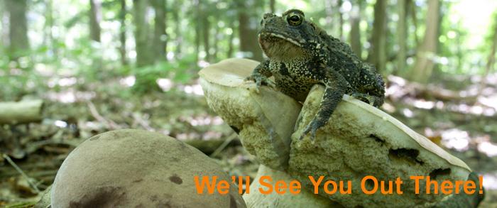 Frog Bottom Banner Ellie Stover