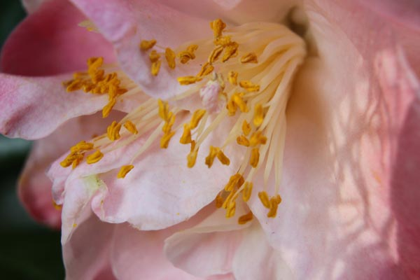 close up of pink flower Extension Tubes for Photography