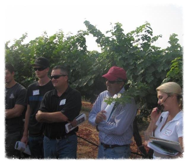2012 Grape Day vineyard