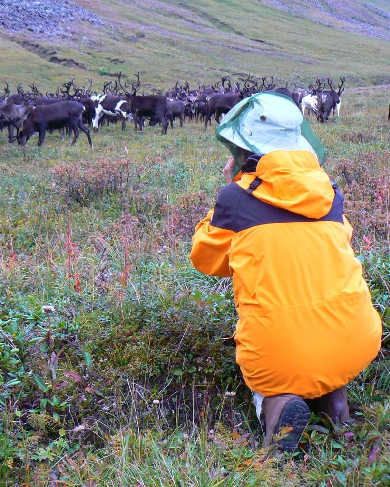 Nomadic reindeer breeders