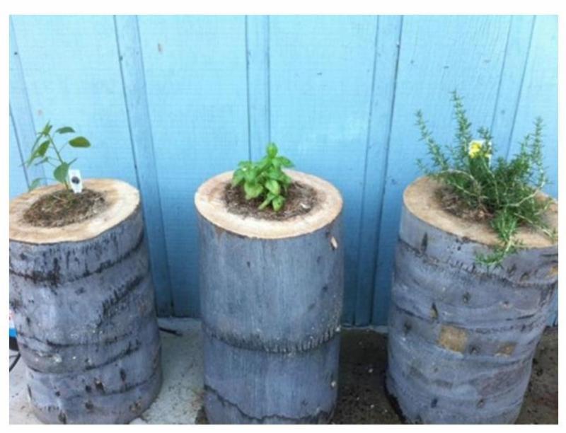 Palm Tree Stump Planters