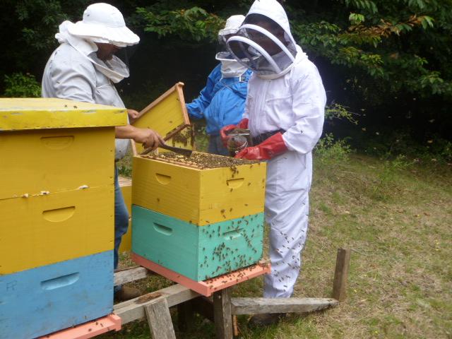 Teaching new beekeepers