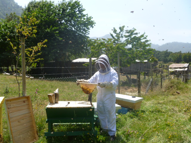 top-bar hives