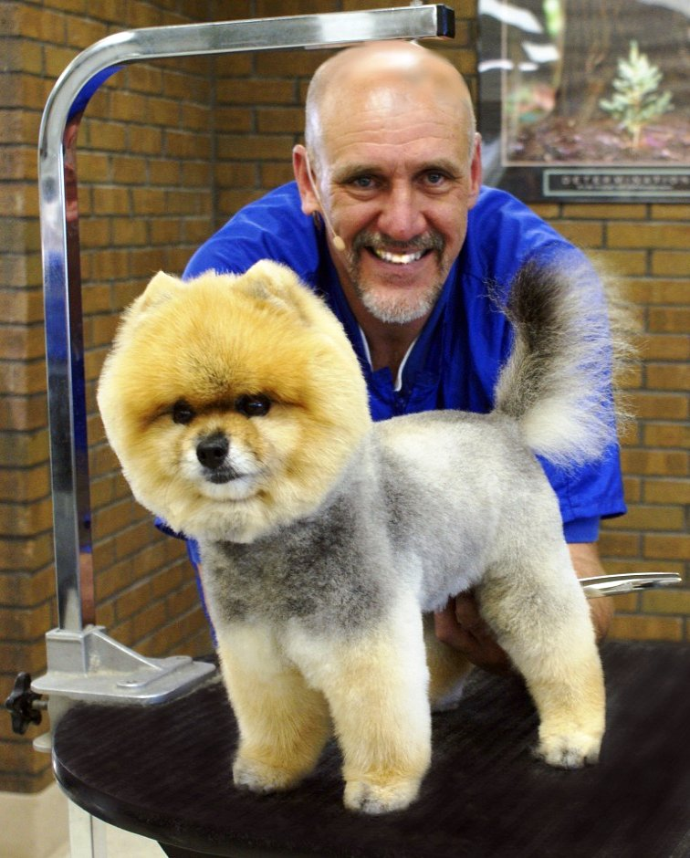 how to trim a pomeranian how can you get the perfect round head every time we ll 5018
