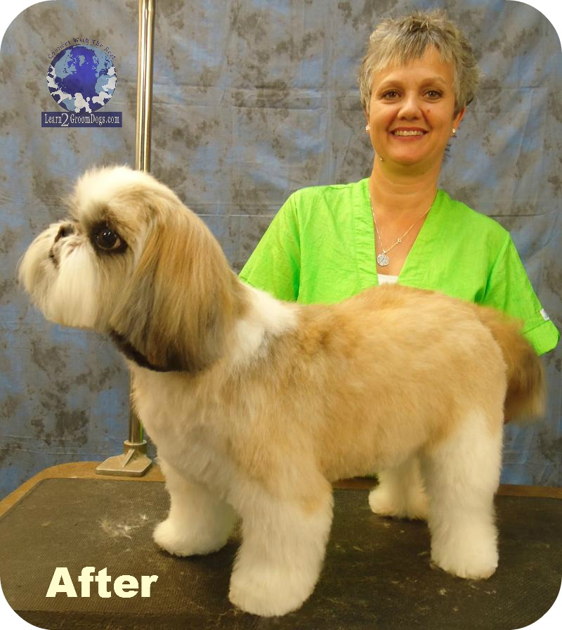 Gettin Er Done Series With Judy Hudson Grooming A Shih Tzu In A