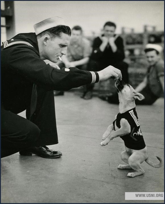 Sailor feeding a dog on board of a navy ship