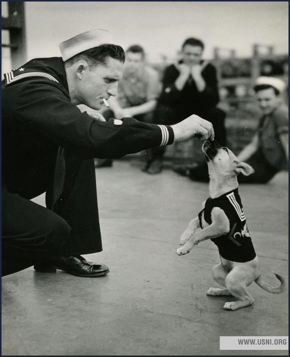 Sailor feeding a dog on board of a navy ship