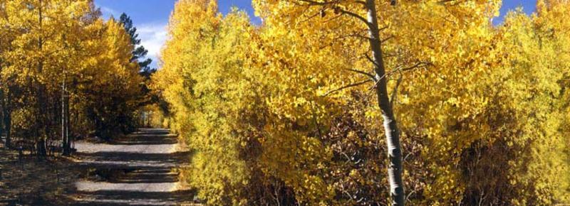 yellow-trees-path.jpg