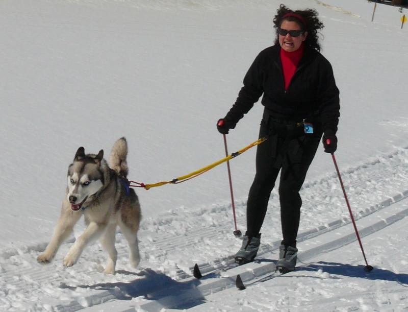 Dog Training Frisco Co