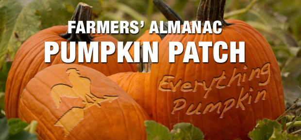 Everything Pumpkin!