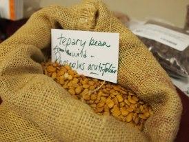 BFS Tepary Beans