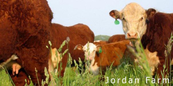 Jordan Farm Beef photo