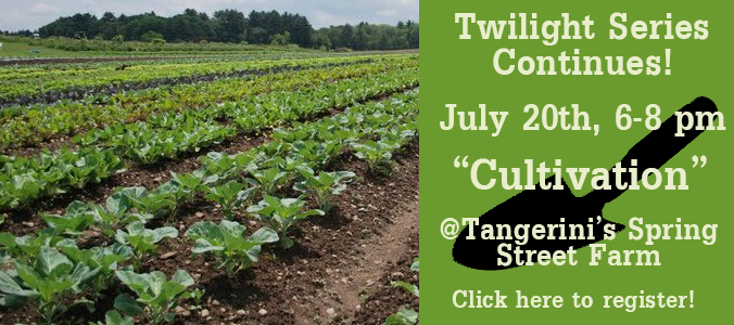 Cultivation Twilight Workshop