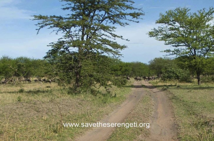 northern Serengeti track