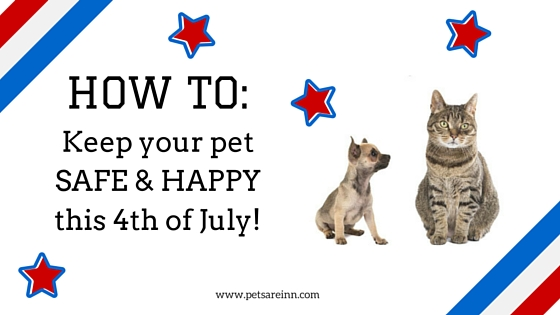 Pets 4th of July