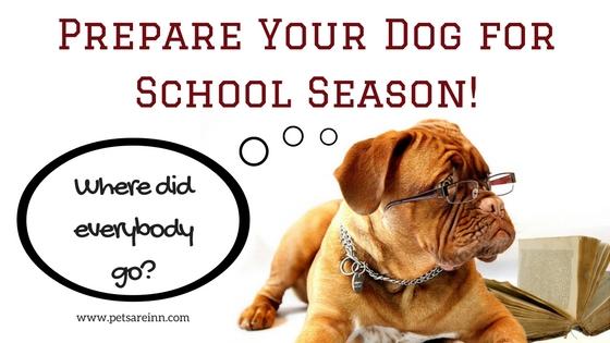 Dog school season