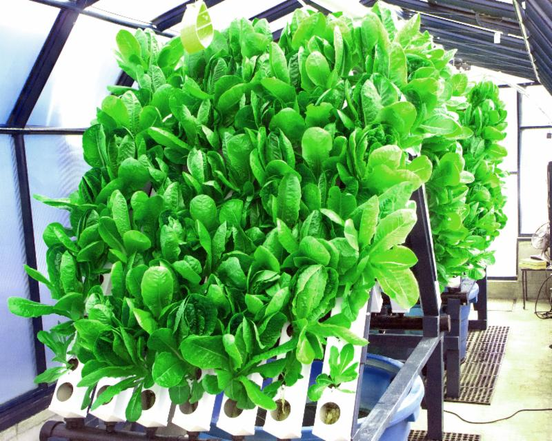 Aquaponicsusa 39 s blog feeding america one family at a for Hydroponic bed liner