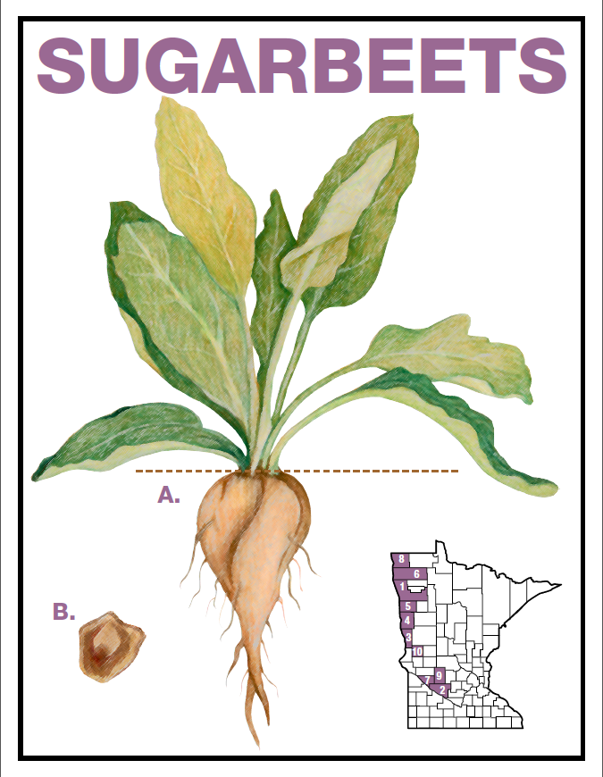 Sugarbeet commodity card front