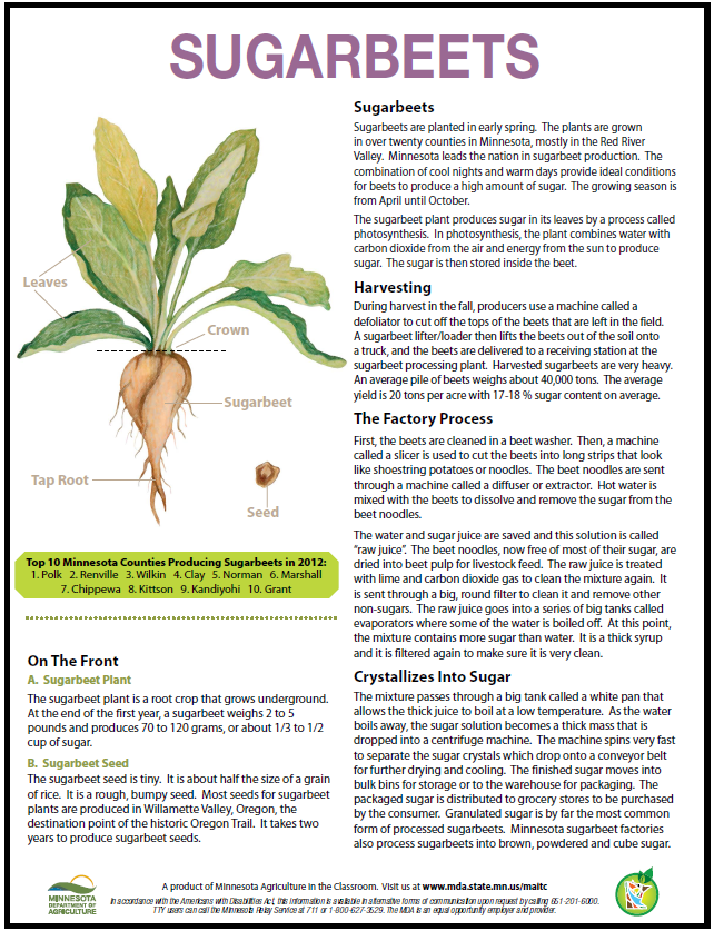 Sugarbeet commodity card back