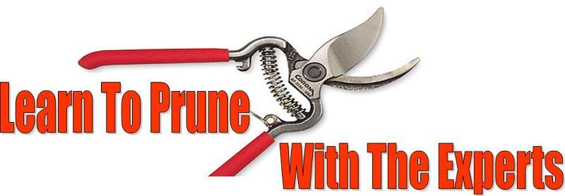 Learn To Prune