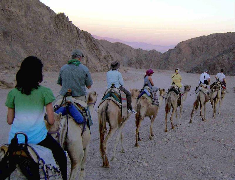 Camel Ride near Eliat ISRAEL