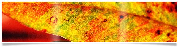 macro-leaf-banner.jpg