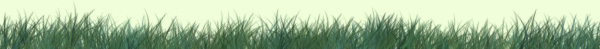 grass-banner3.jpg