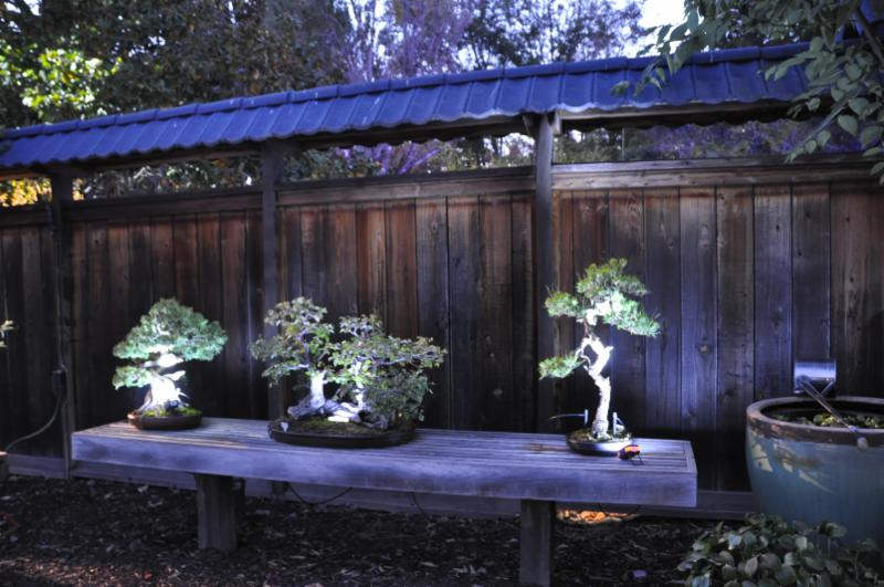 Bonsai Garden At Lake Merritt Garden Ftempo