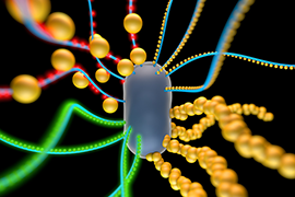 An artist's rendering of a bacterial cell engineered to produce amyloid nanofibers that incorporate particles such as quantum dots (red and green spheres) or gold nano particles. Image courtesy of Yan Liang.
