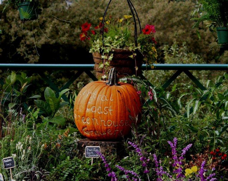 CCGGA Pumpkin