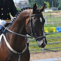 4-H FFA Horse Show - Adel Iowa