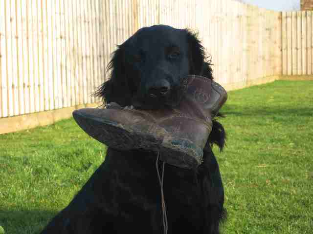 Alfie and the shoe