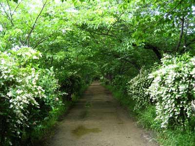 Uno hana - flowering shrubs